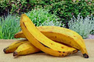 The Plantain: Fruit or Vegetable?