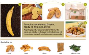 big banana plantain products