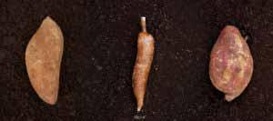 Mic food root vegetables