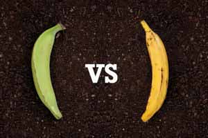 Green Plantains vs Yellow Plantains: What's the Difference?