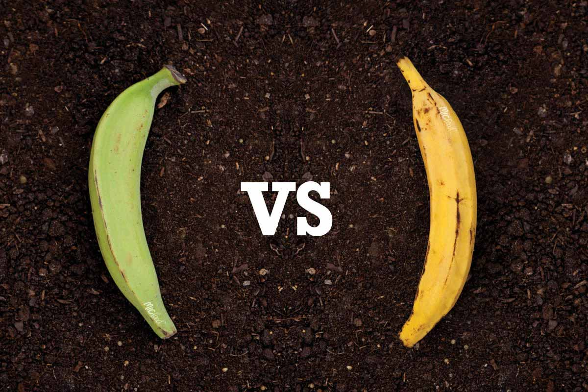 Mic Food Green Plantains Vs Yellow Plantains What S The Difference